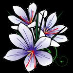 花サフラン