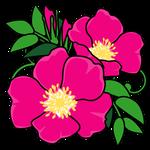 花ハマナス(北海道の花)