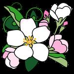 花リンゴ(青森県の花)