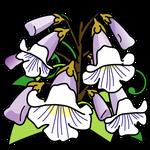 花桐(岩手県の花)