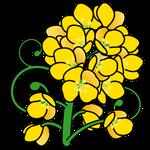 072花菜の花(千葉県の花)