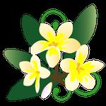 079花イラストプルメリア(1~12月)