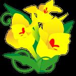 081花イラストカンナ(7月)