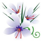 084花イラストサフラン(10月)