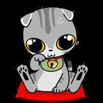 164可愛いスコの金運招き猫