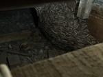 クロスズメバチ巣