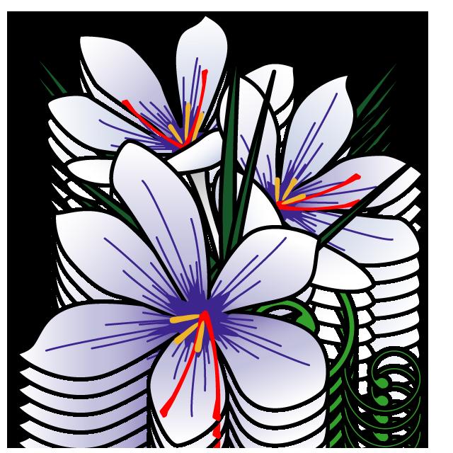花サフランのフリーイラスト